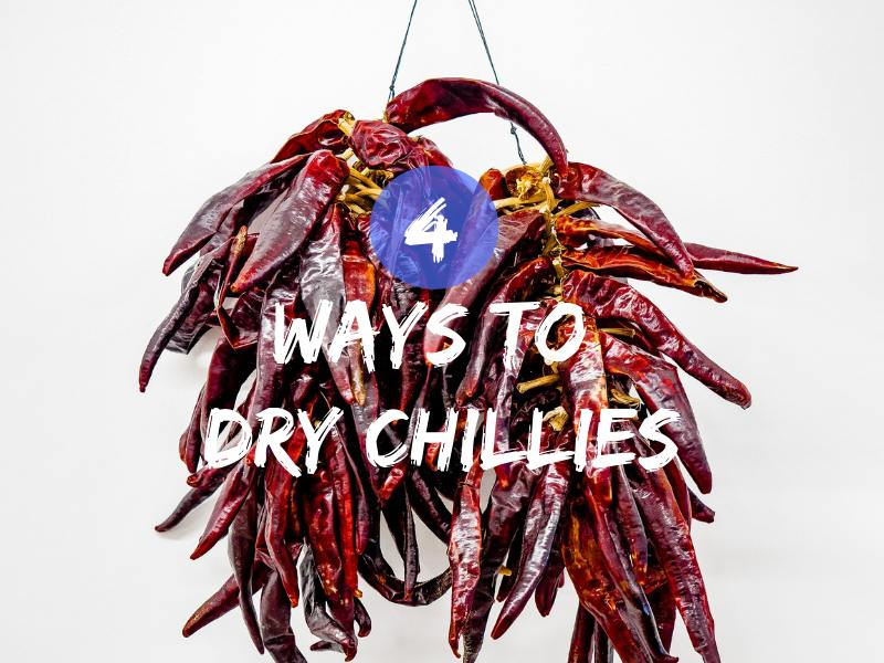 4 Ways To Dry Chillies