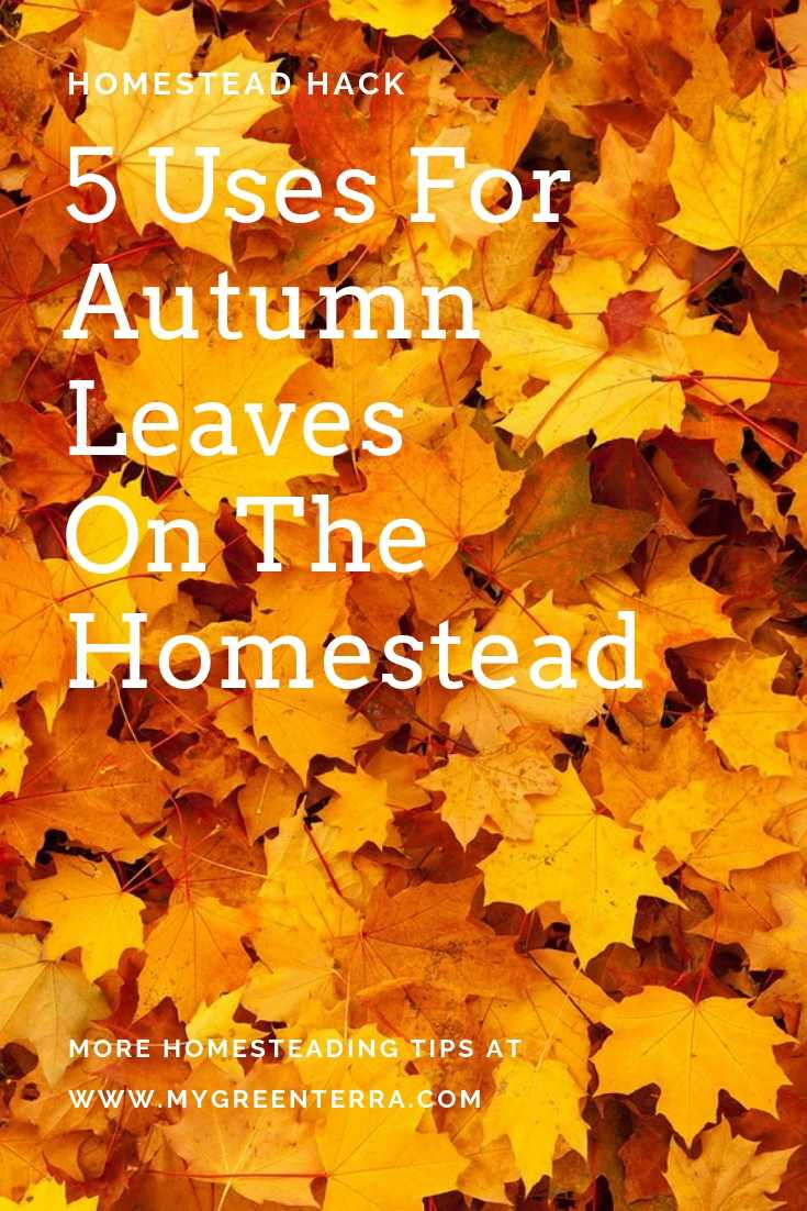 5 Uses For Autumn Leaves On The Homestead