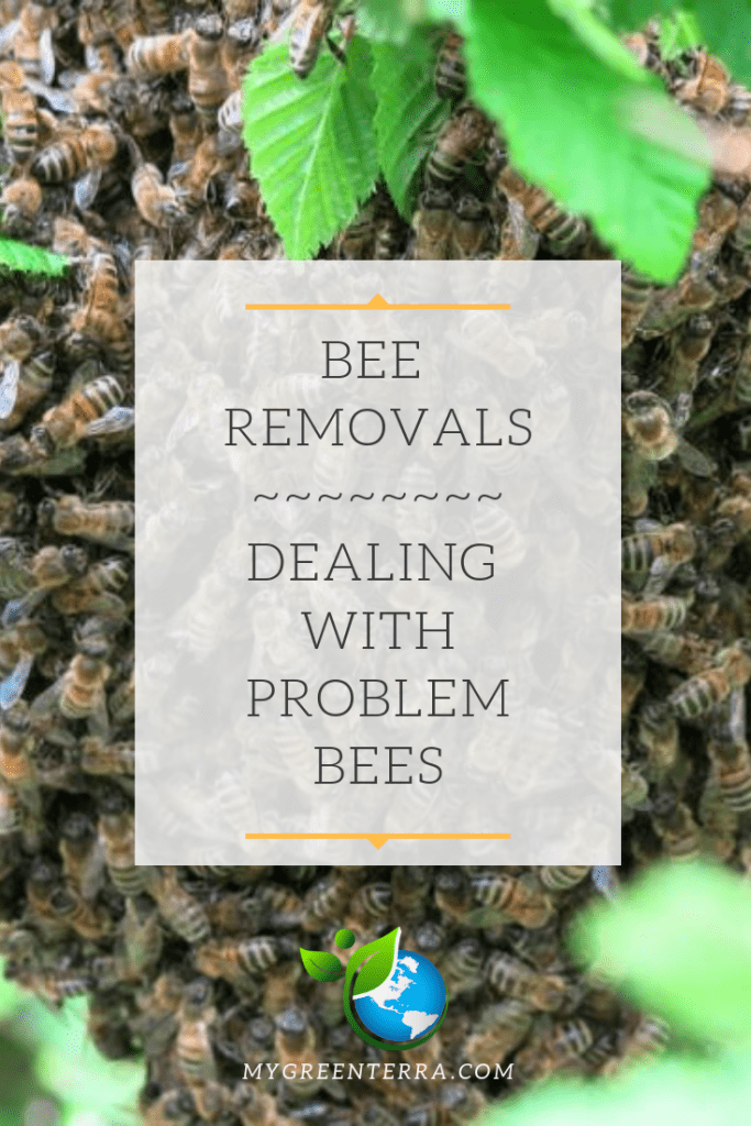 Bee Removals - Dealing with problem bees