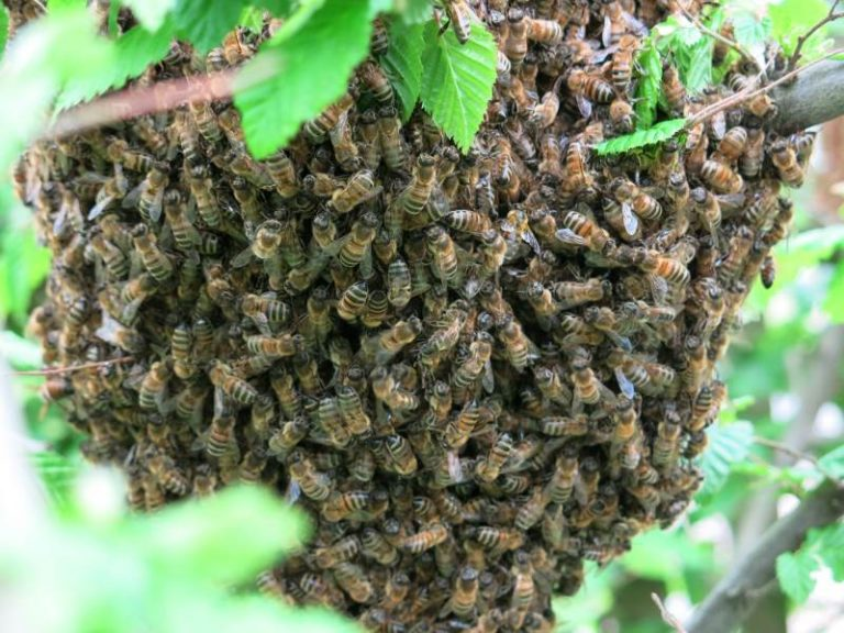 Bee Removal – Dealing With Problem Bees