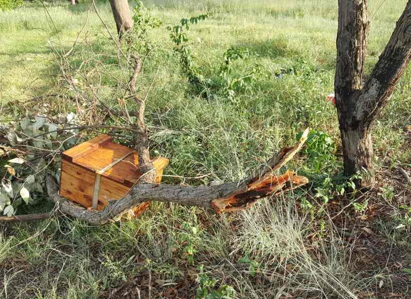Beehive Emergency