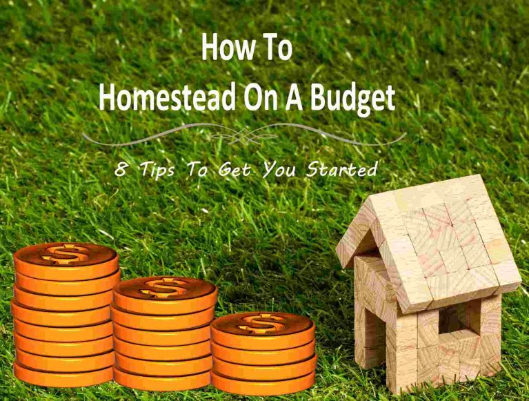 How To Homestead On A Budget