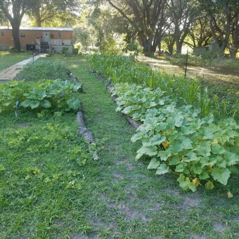 Experimental Garden