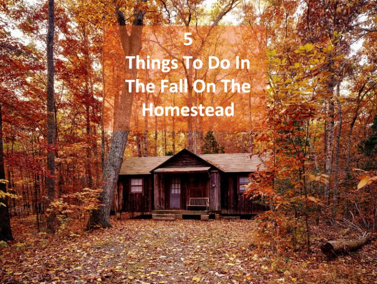 5 Things You Should Do In The Fall On The Homestead