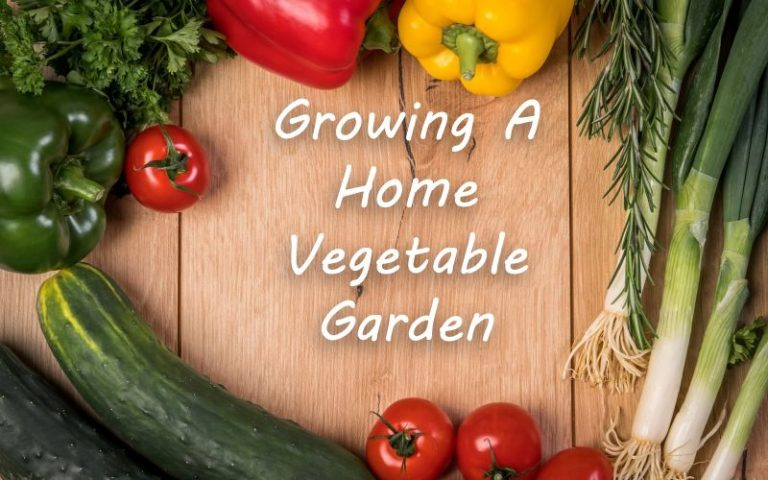 Growing A Home Vegetable Garden