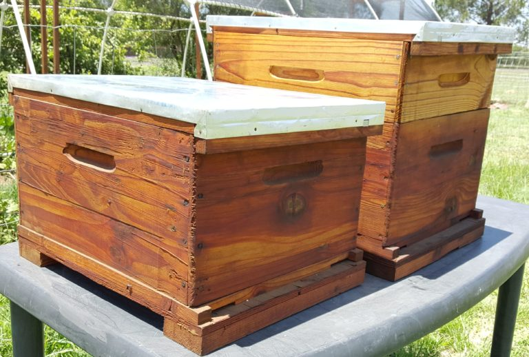 Best Beehive For Beginner Beekeepers