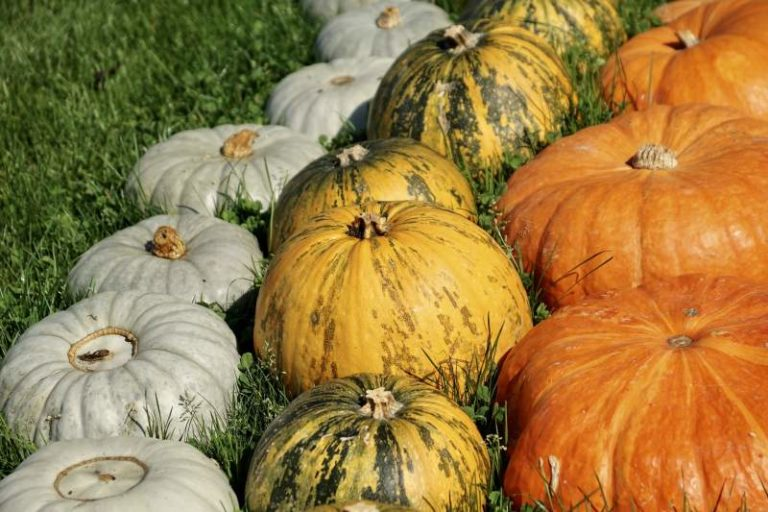 How To Grow An Awesome Pumpkin Patch