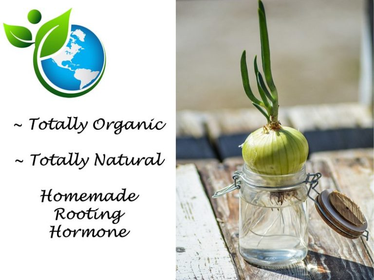 5 Steps To Make Your Own Organic Rooting Hormone