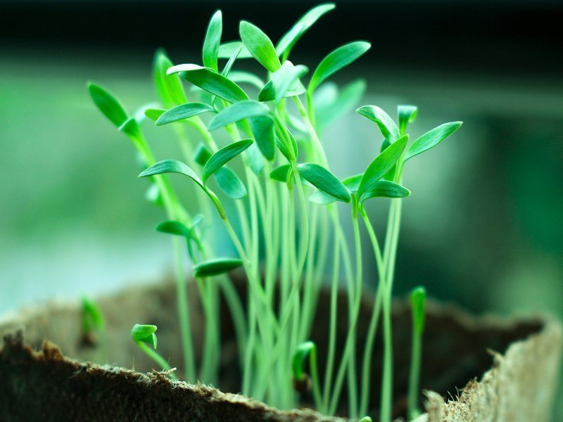 Self Reliance Challenge Increase Seed Success