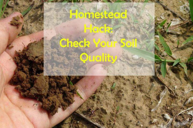 Homestead Hack: Check Your Soil Quality