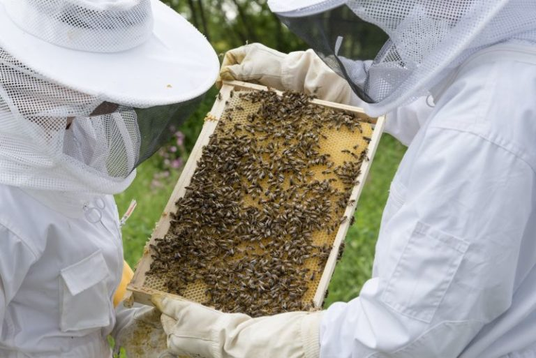 5 Must Have Items For Beekeeping