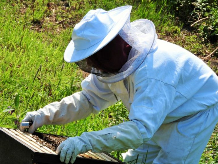 4 Tips For Choosing a Beekeepers Suit
