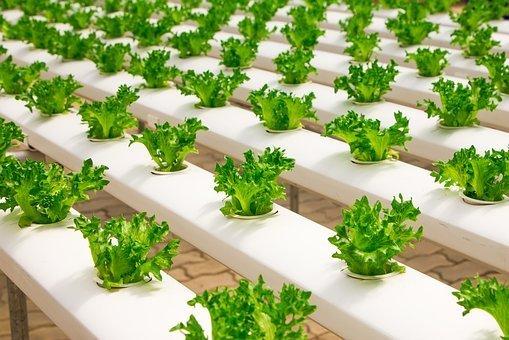 Alternative Growing Methods